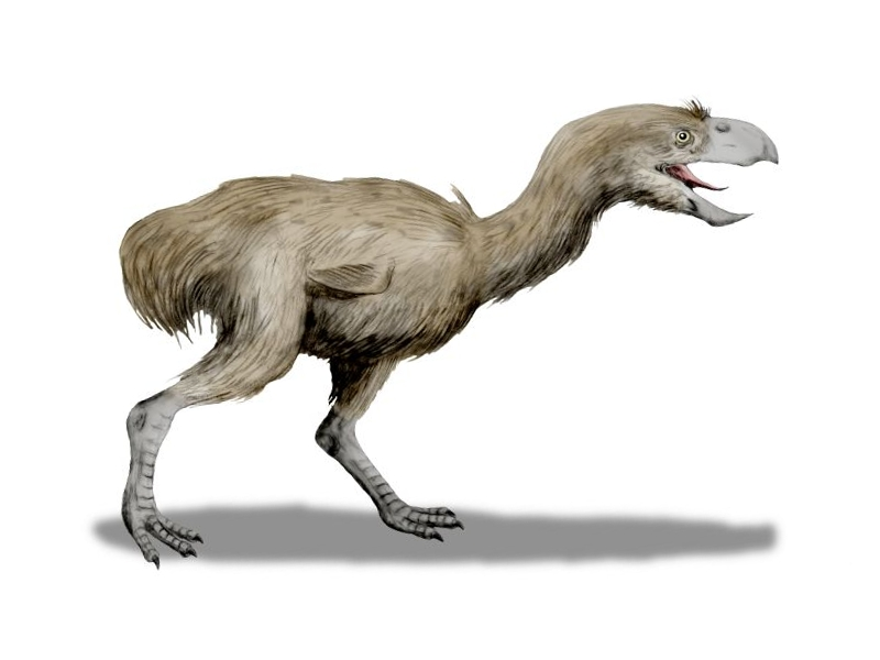 Paraphysornis BW-2r
