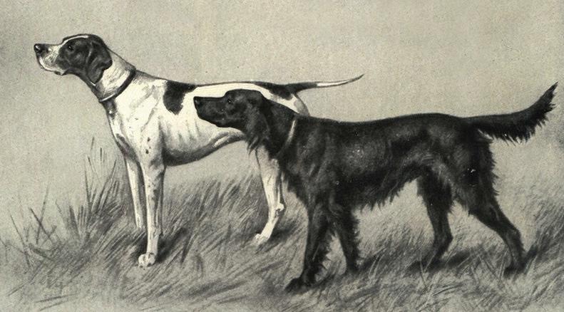 охотничья легавая собака