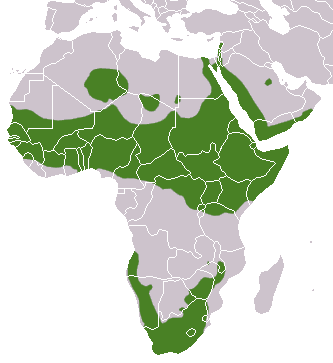 Bestand:Rock Hyrax area.png
