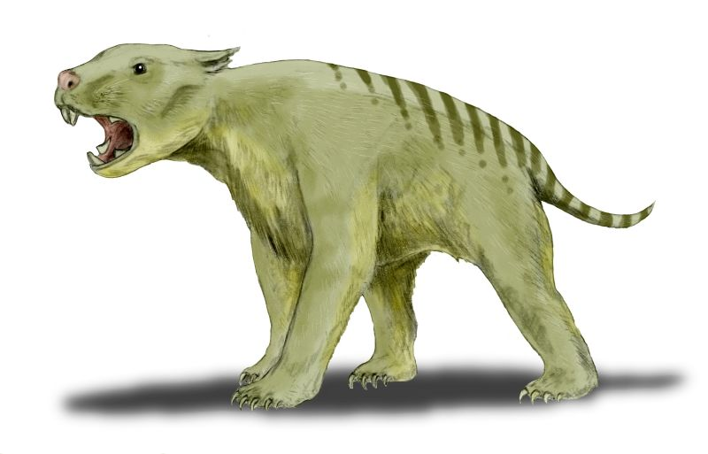 filethylacoleo bwjpg