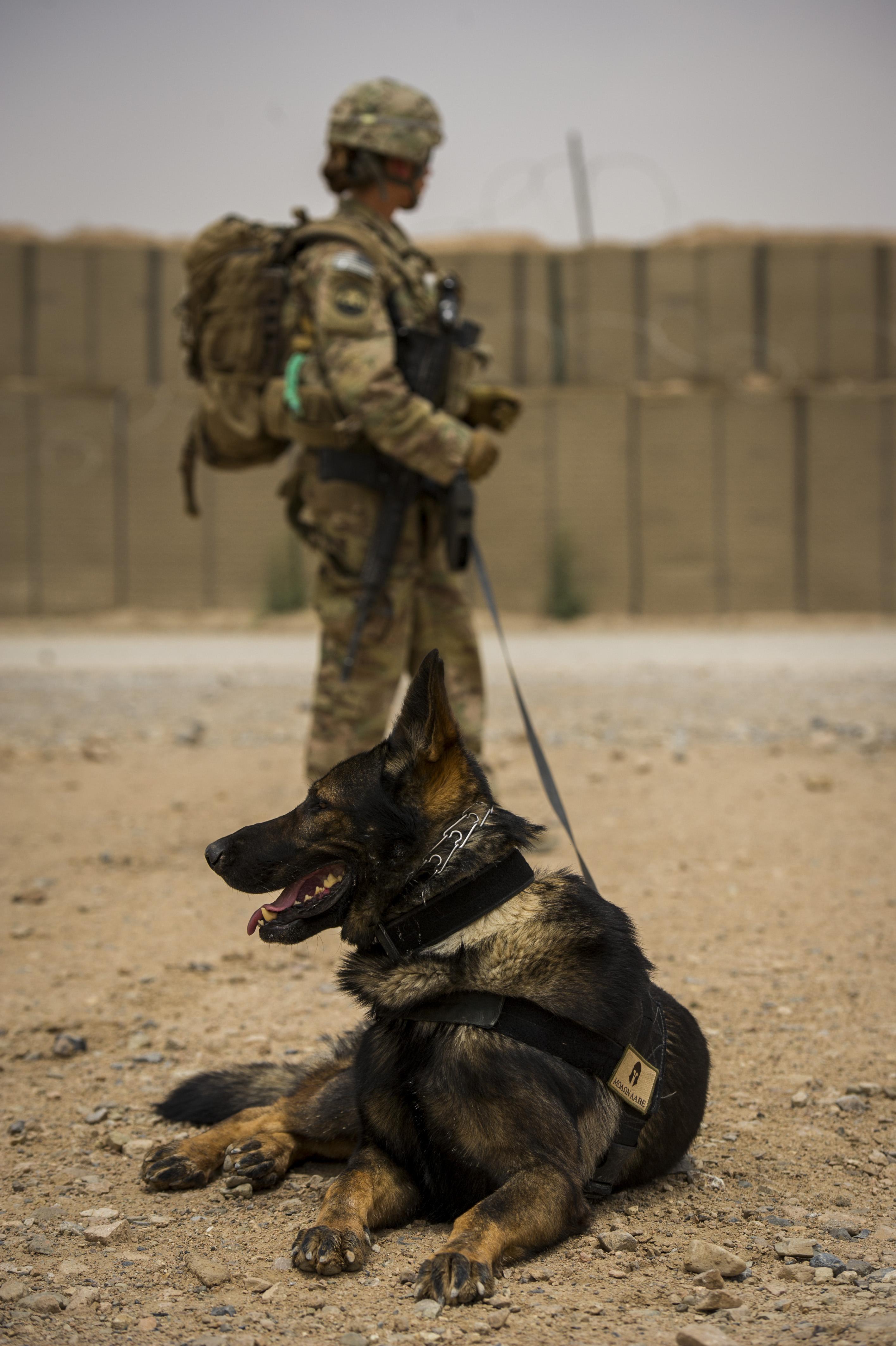 Military Working Dogs Adoption Uk