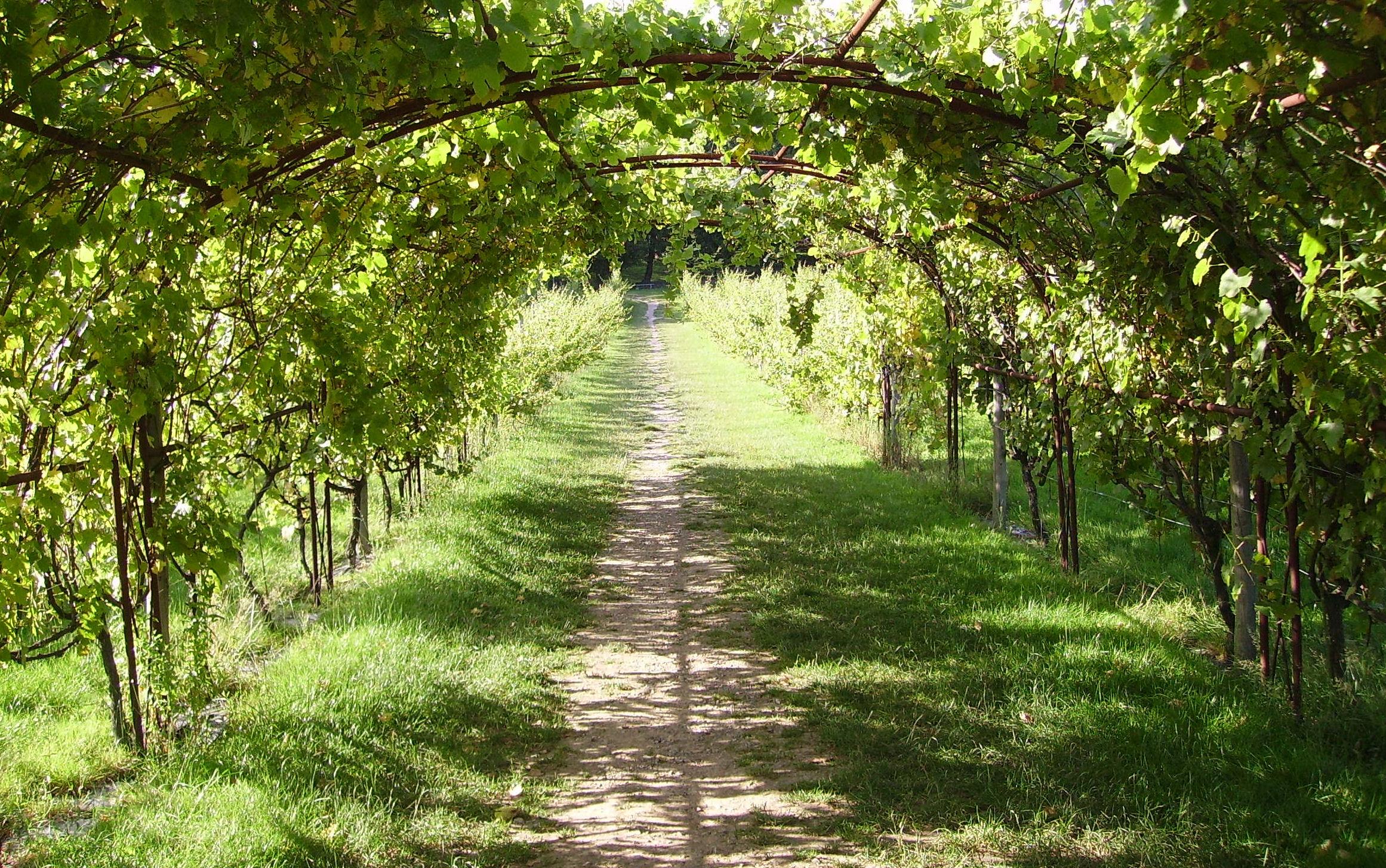 Виноградная арка своими руками фото