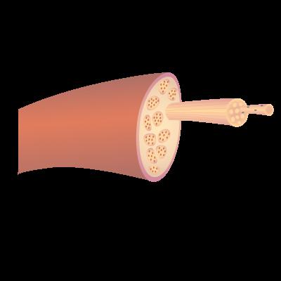 201405 skeletal muscle