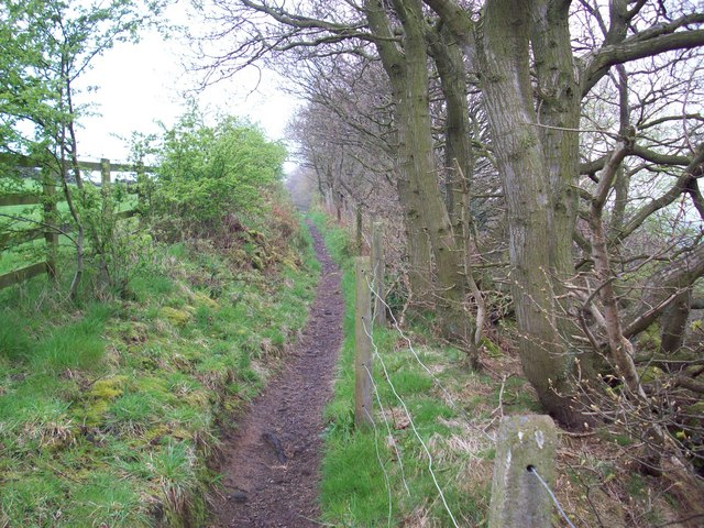 Above North Dean Wood, on Calderdale Way - geograph.org.uk - 882281