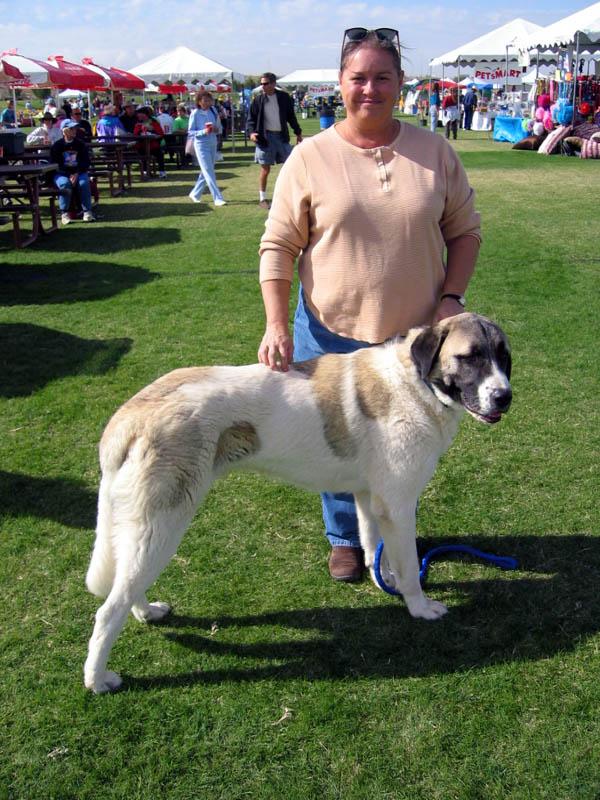 Anatolian Shepherd Dog Puppies For Sale