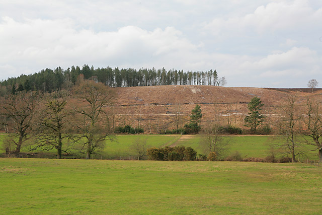 File:Clear-felled part of Newlands Plantation - geograph.org.uk - 368768.jpg