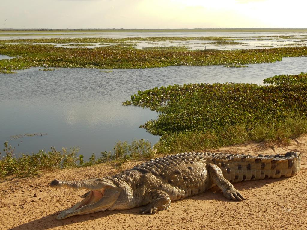 Animales-de-hábitat-acuático