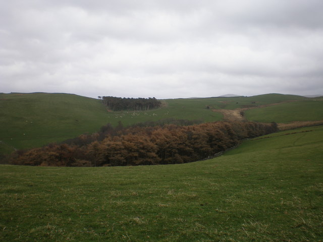 File:Copses. - geograph.org.uk - 362376.jpg - Wikimedia Commons