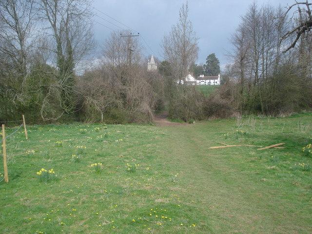 Daffodil Way at Dymock - geograph.org.uk - 768743