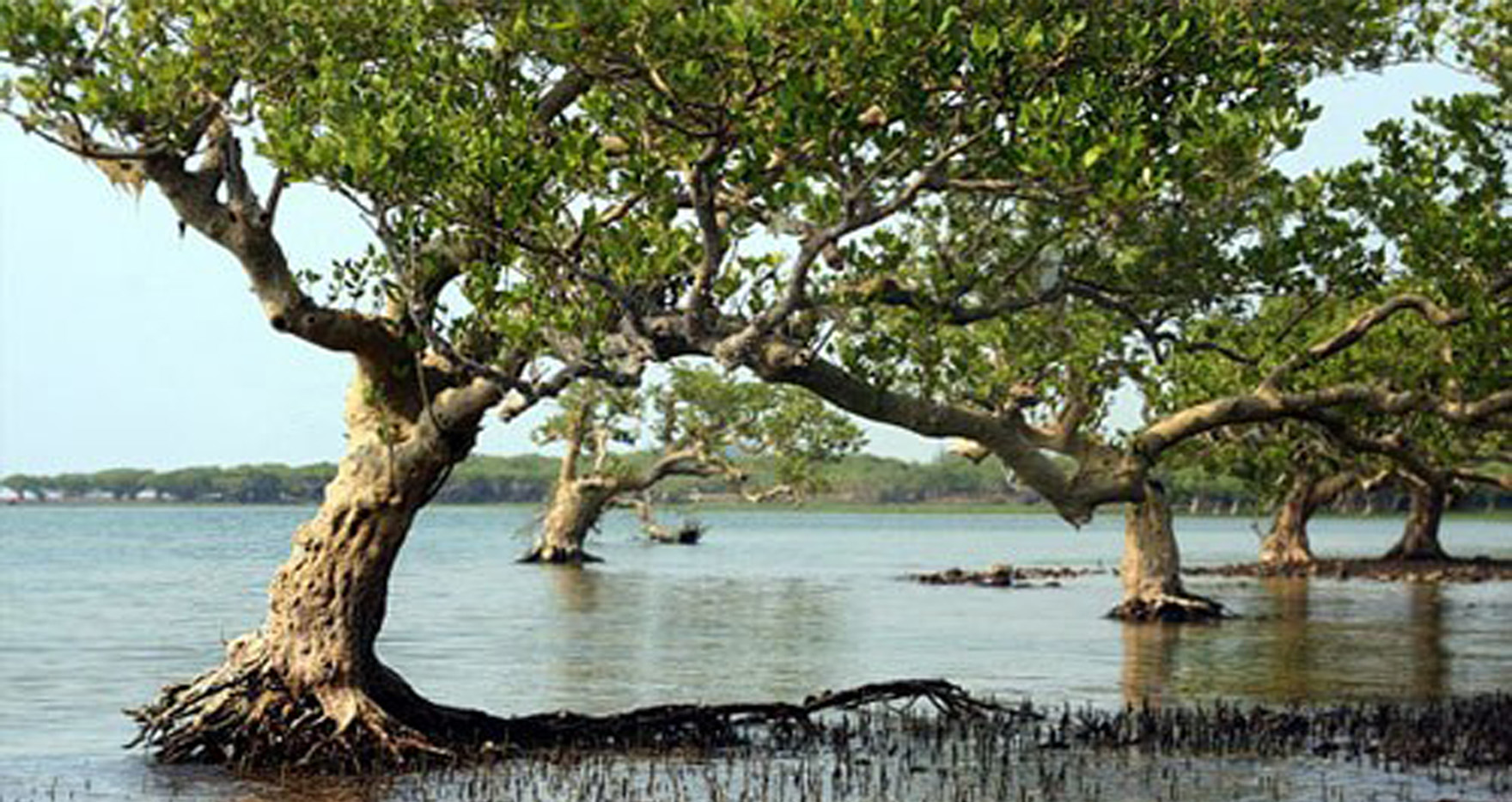 mangrove ecosystem Mangrove ecosystems in the  western indian ocean region community based restoration, adaptation, management and  governance approaches for mangrove ecosystems in.