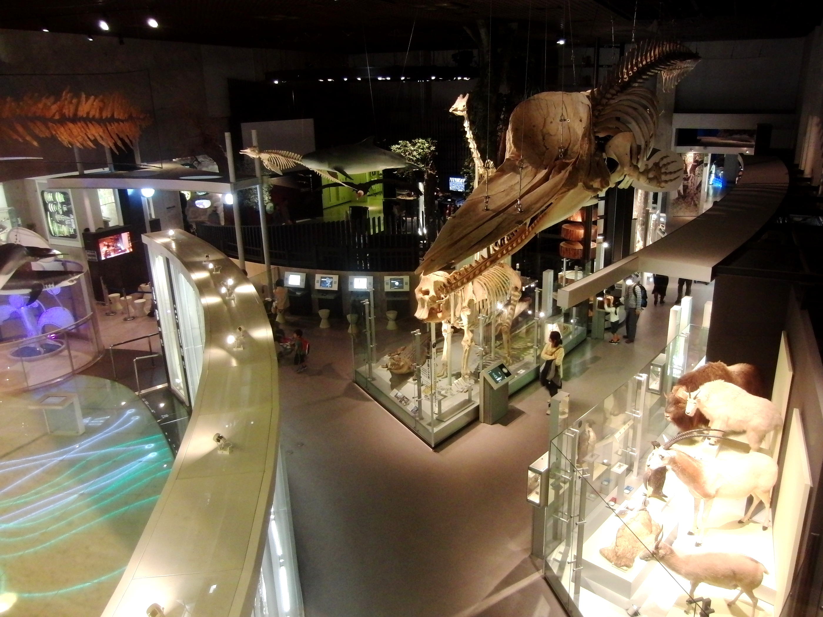 National Museum of Nature and Science, Tokyo, Japan ...