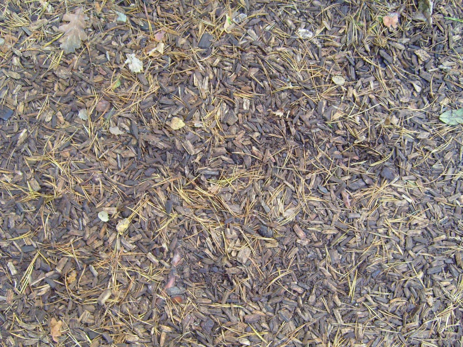 Dirty Wood Chips ~ File forest ground wood chips pine needles g wikimedia