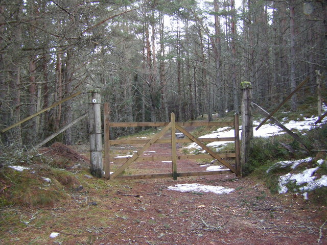 Gate in the forest - geograph.org.uk - 1726119.jpg