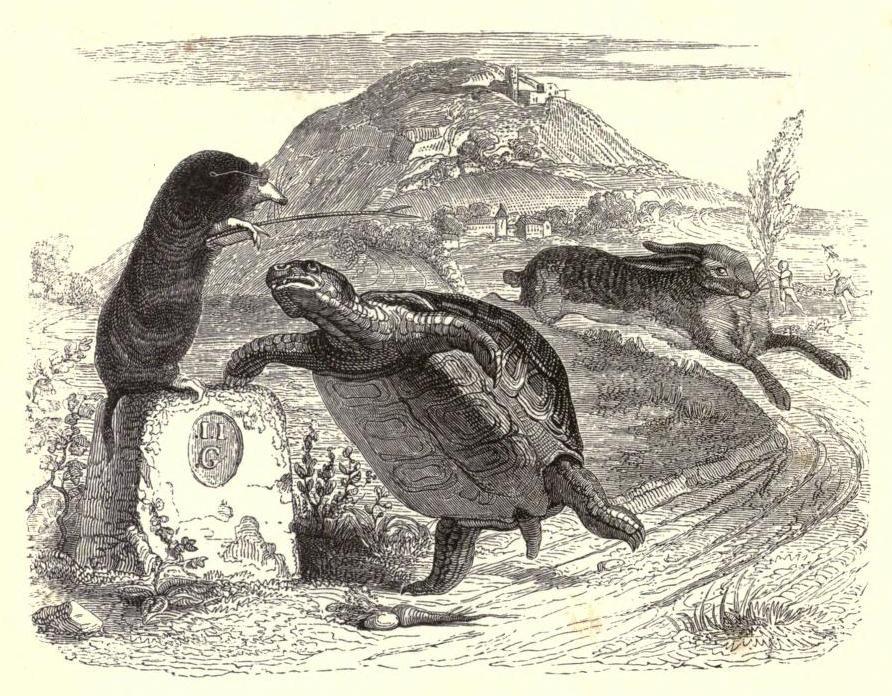 Grandville_tortoise.jpg (892×696)