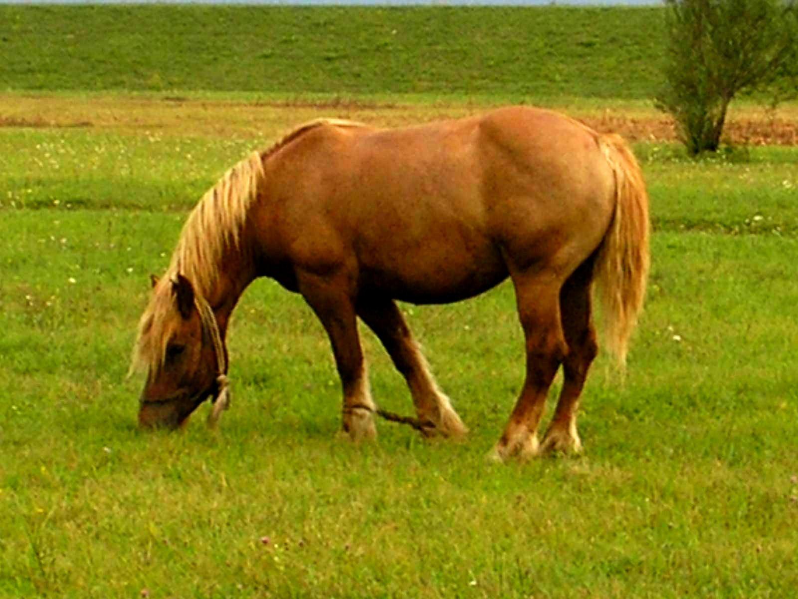 Fayl:Horse, Croatia, 2007.jpg - Vikipediya