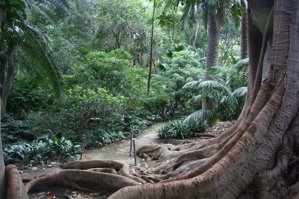 File laconcepci wikimedia commons for Bodas jardin botanico malaga