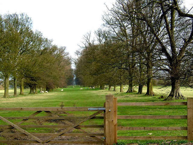 Lime Tree Avenue, Boughton Park - geograph.org.uk - 152671