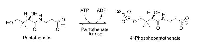 https://upload.wikimedia.org/wikipedia/commons/3/34/Mechanism_os_pantothenate_kinase.png
