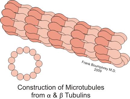 Prokaryotes v.s. Eukaryotes