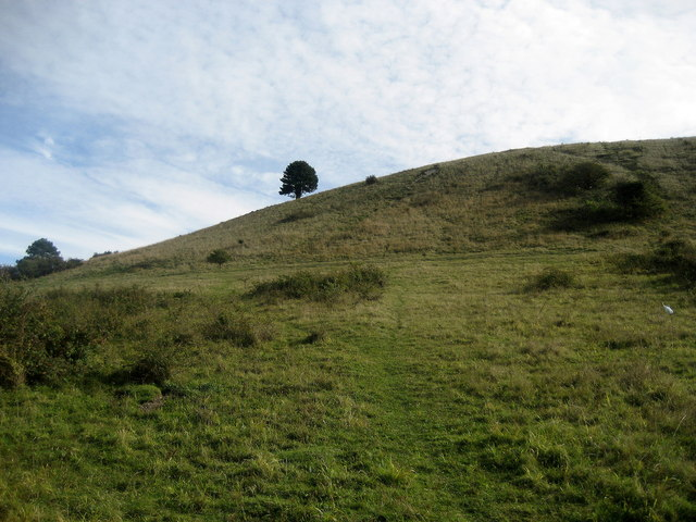 Northern Flank of Ivinghoe Beacon - geograph.org.uk - 573652