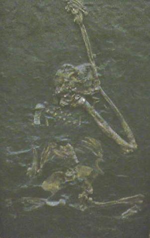 Ореопитек