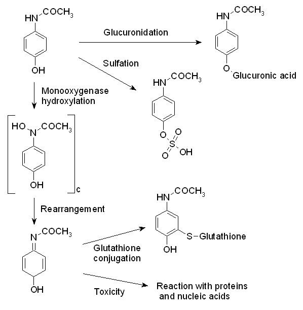 File:Paracetamol metabolism.png - Wikipedia, the free encyclopedia