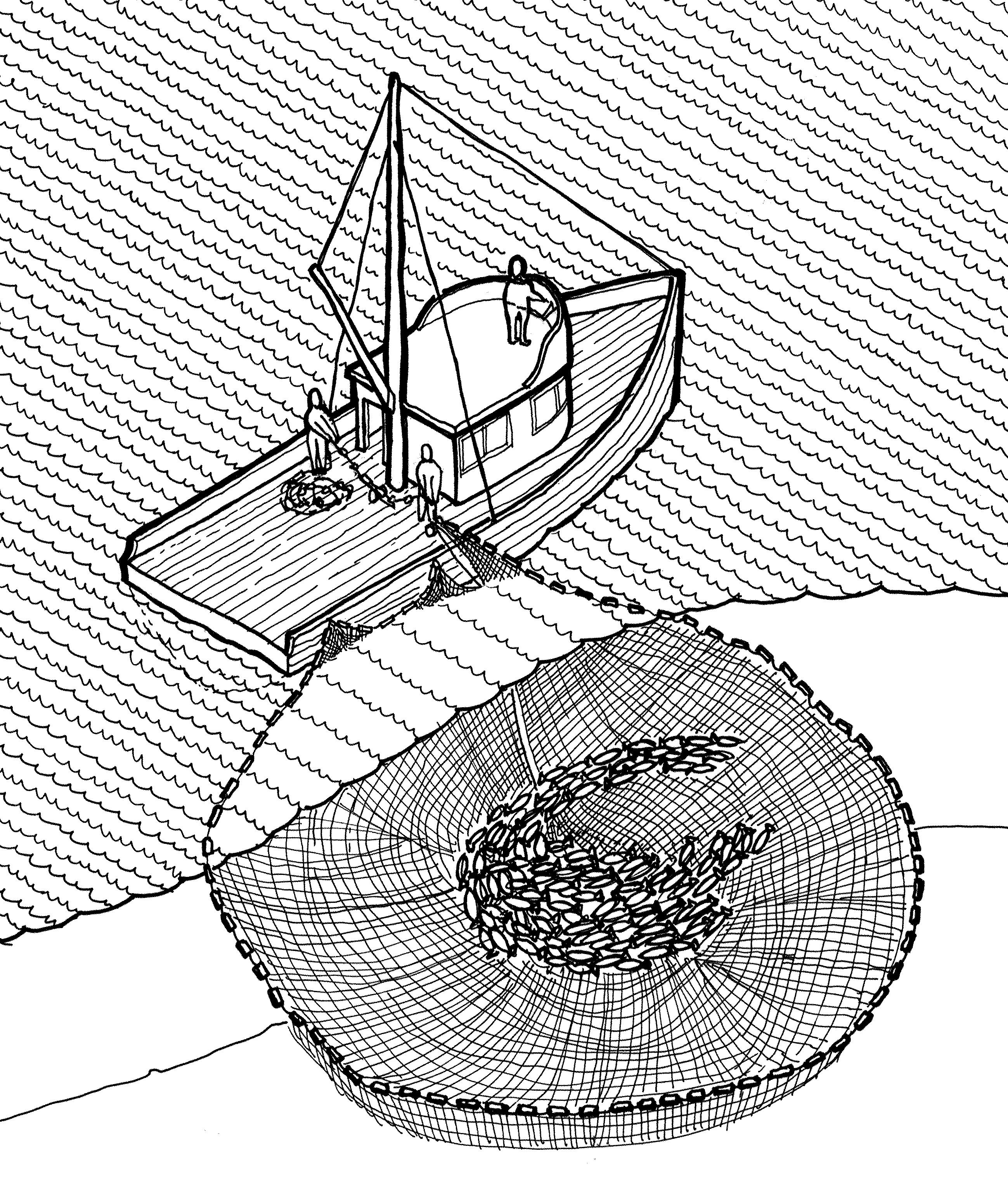 File purse seine illustration historic american for Cerco illustratore