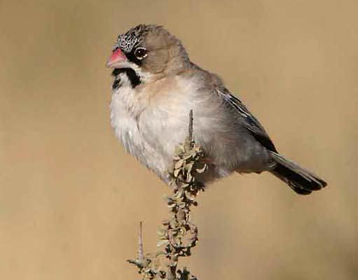 white finch bird nest