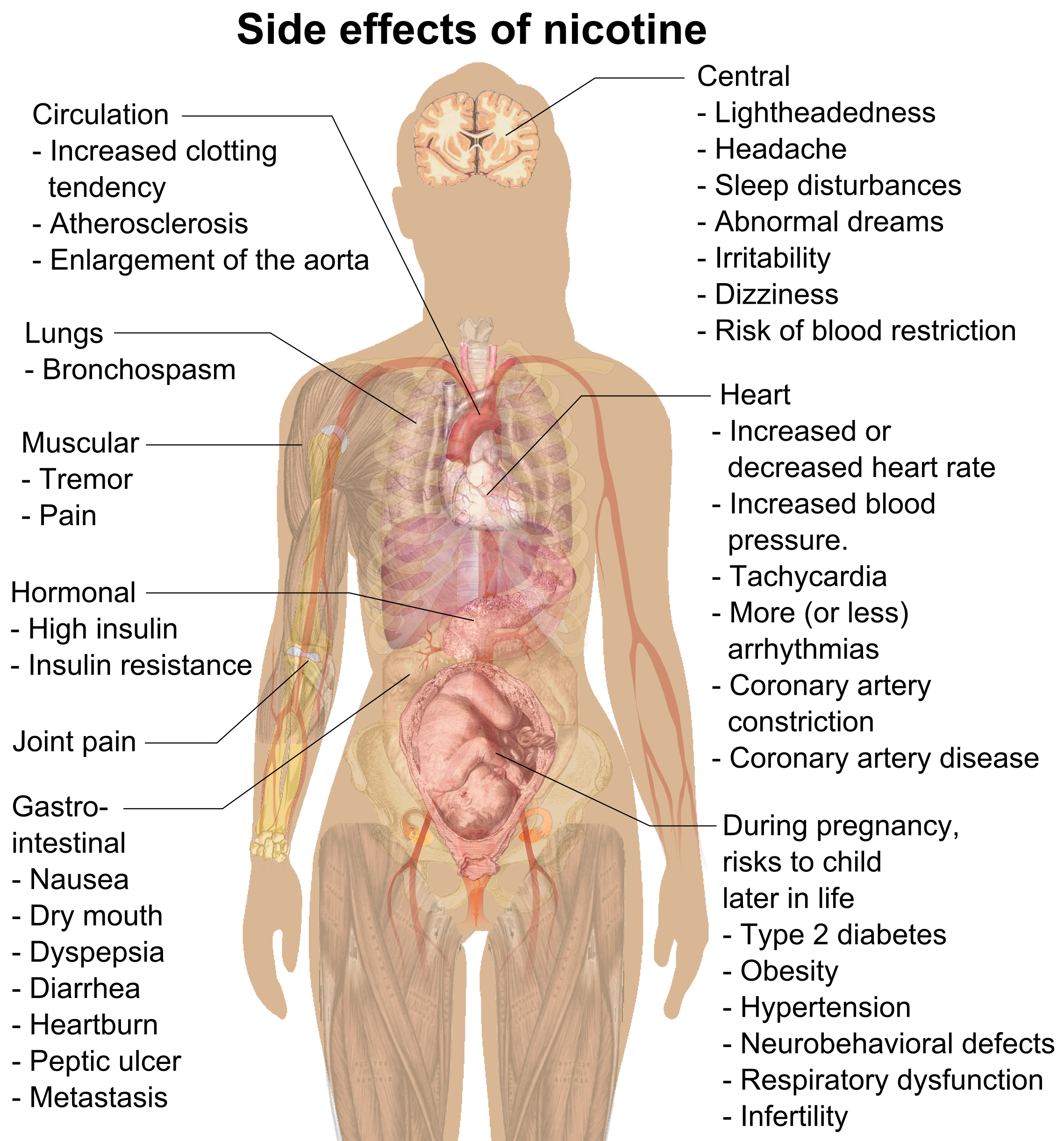 File:Side effects of nicotine.png - Wikimedia Commons