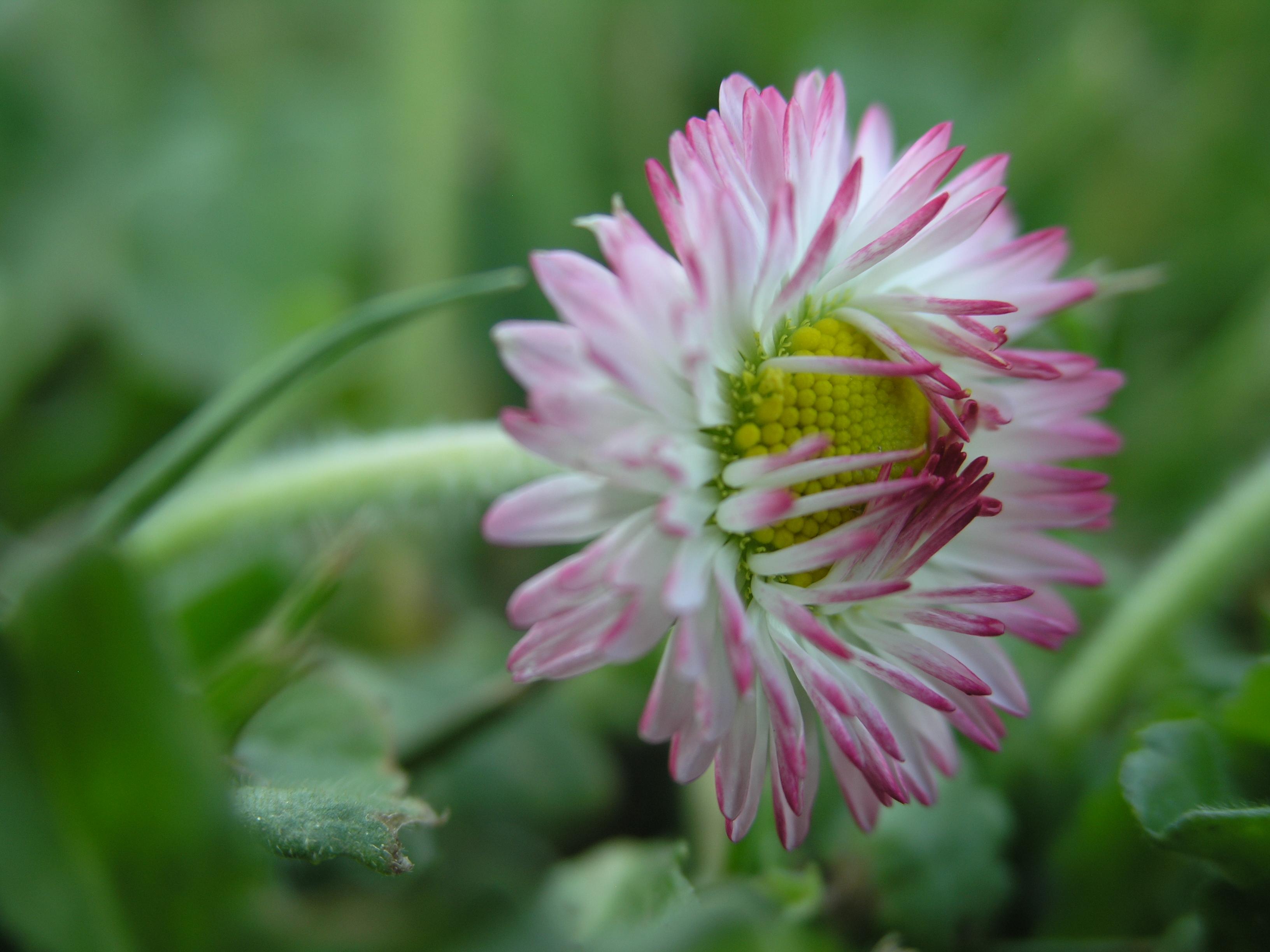 File Small Flower 2 JPG Wikimedia mons