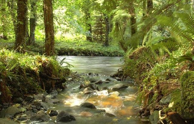 Životné prostredie lesných obojživelníkov