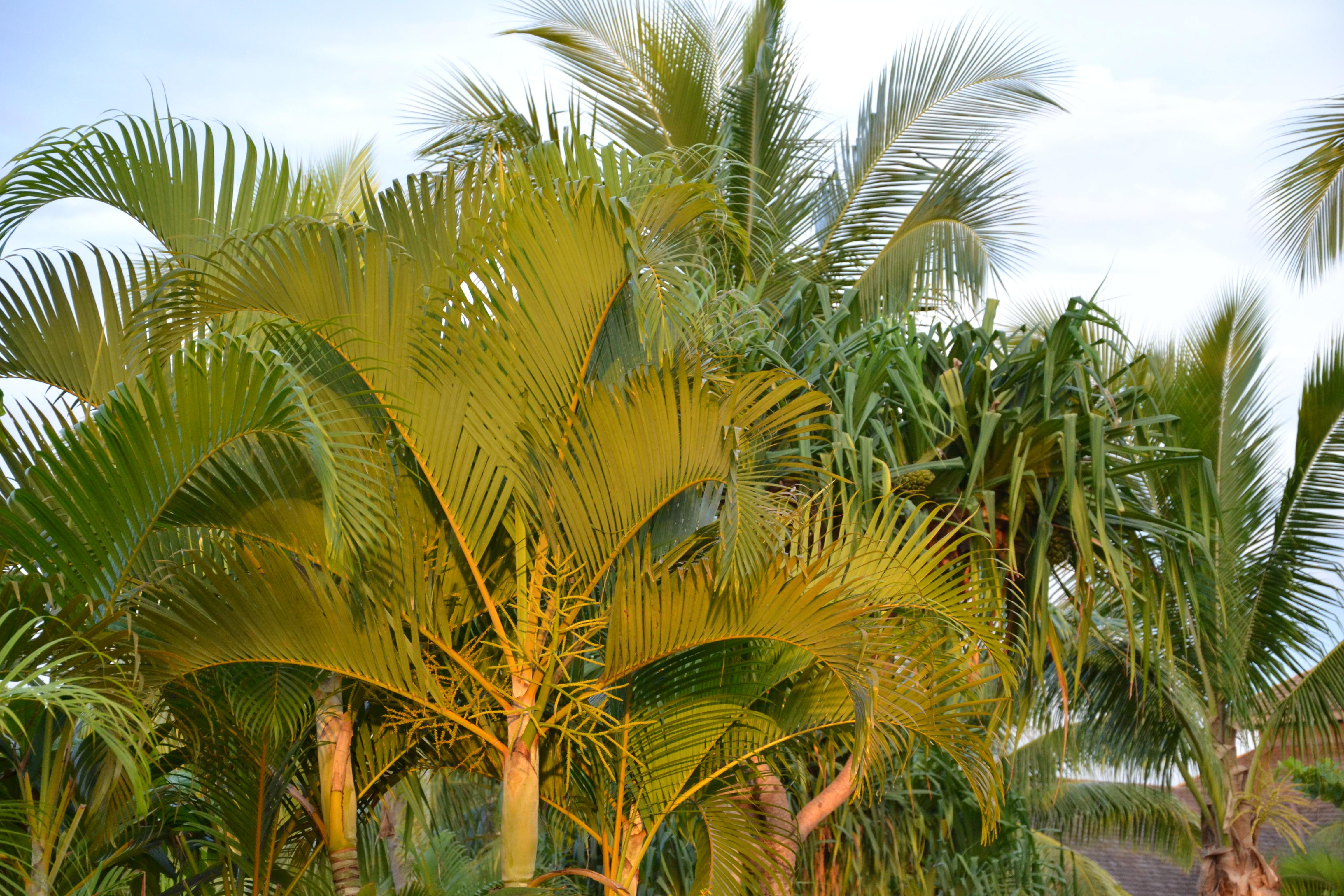file sunset palm tree 6753911605 jpg wikimedia commons