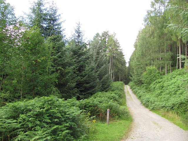 Track, Achray Forest - geograph.org.uk - 2000925