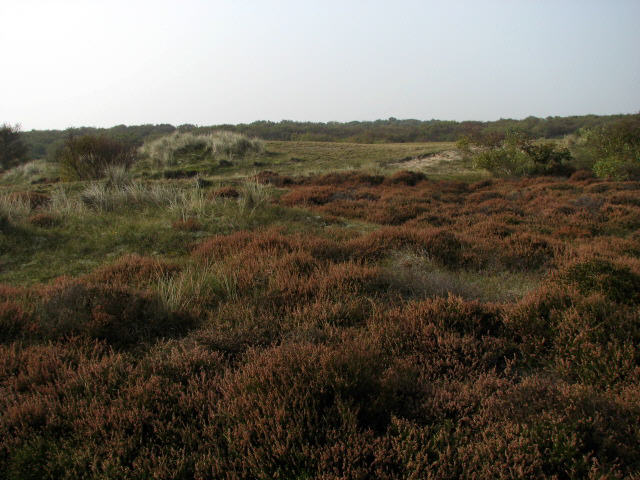 Winterton Dunes Nature Reserve - geograph.org.uk - 581043