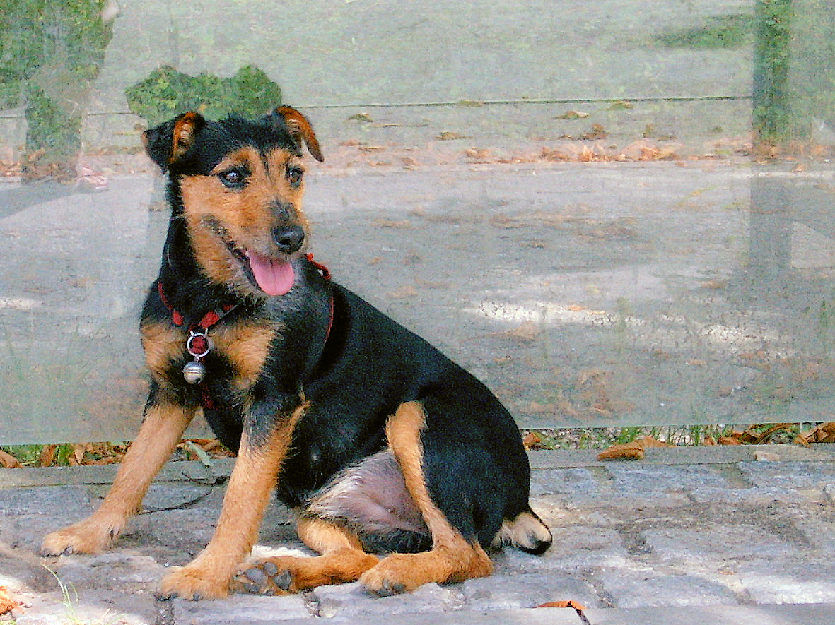 Black And Tan Dog Breeds List