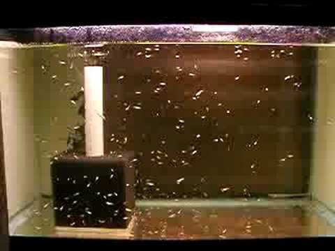 Image Result For Aquarium Filters For