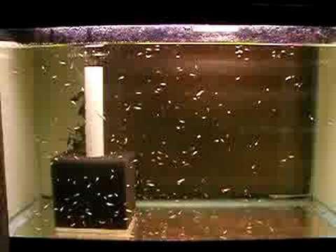 Aquarium betta joy studio design gallery best design for Betta fish tanks with filter