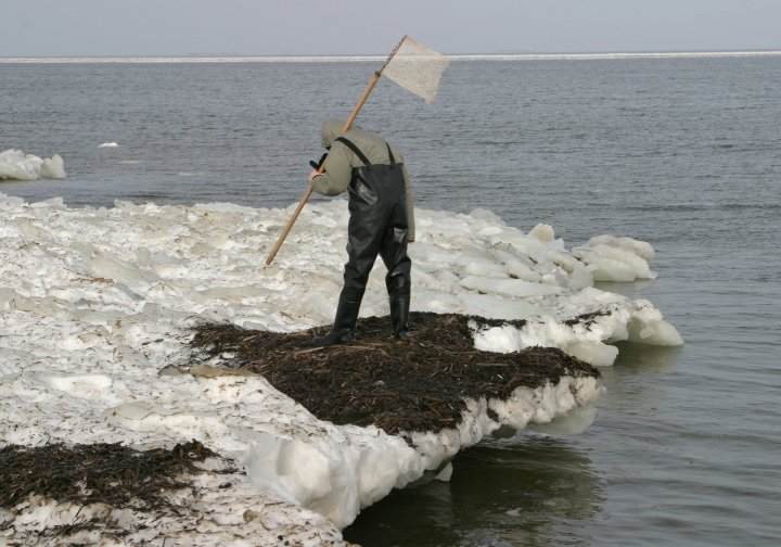 Fishing for amber on the coast of Baltic Sea. Winter storms throw out amber nuggets. Close to Gdansk, Poland.