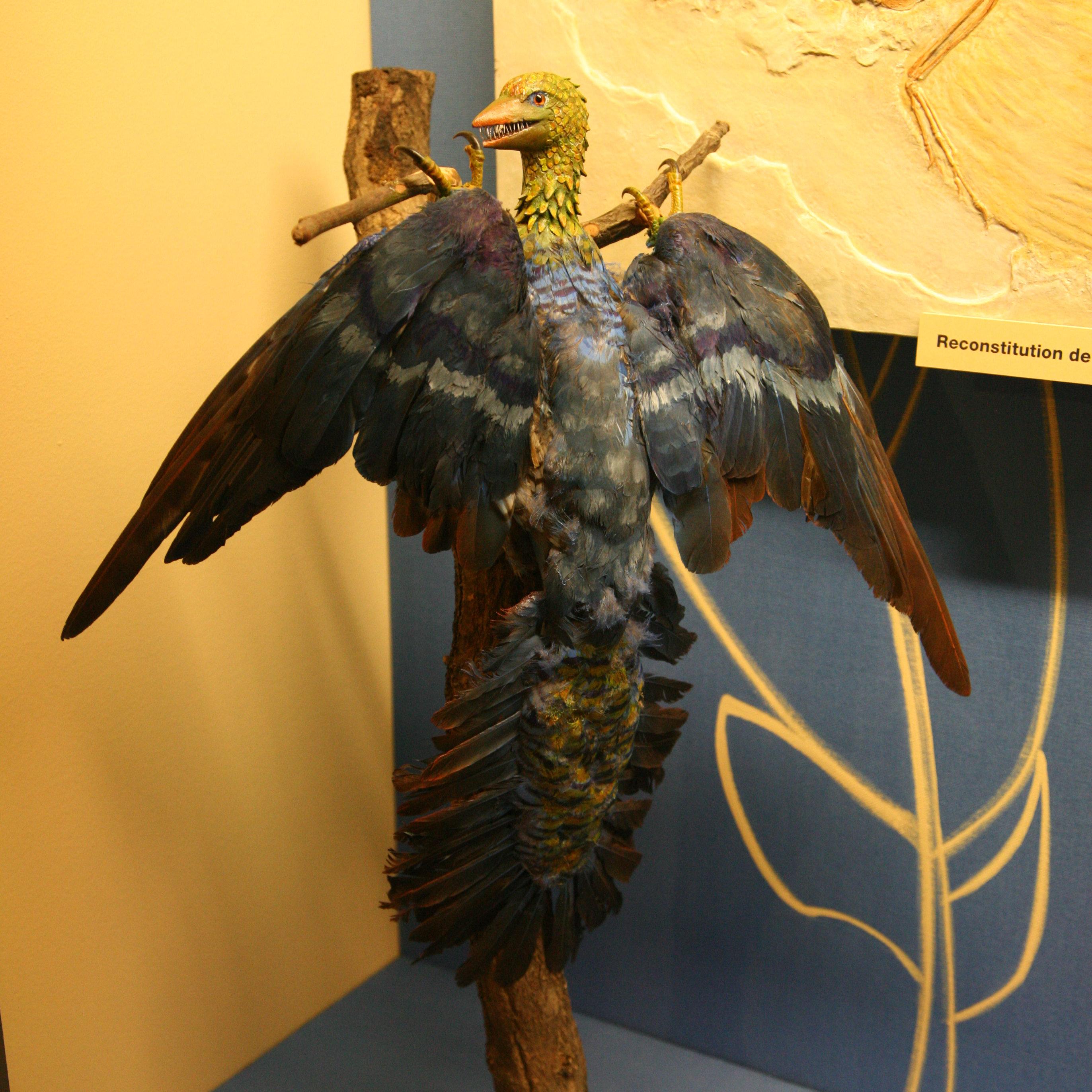 Archaeopteryx-img 0291b.jpg
