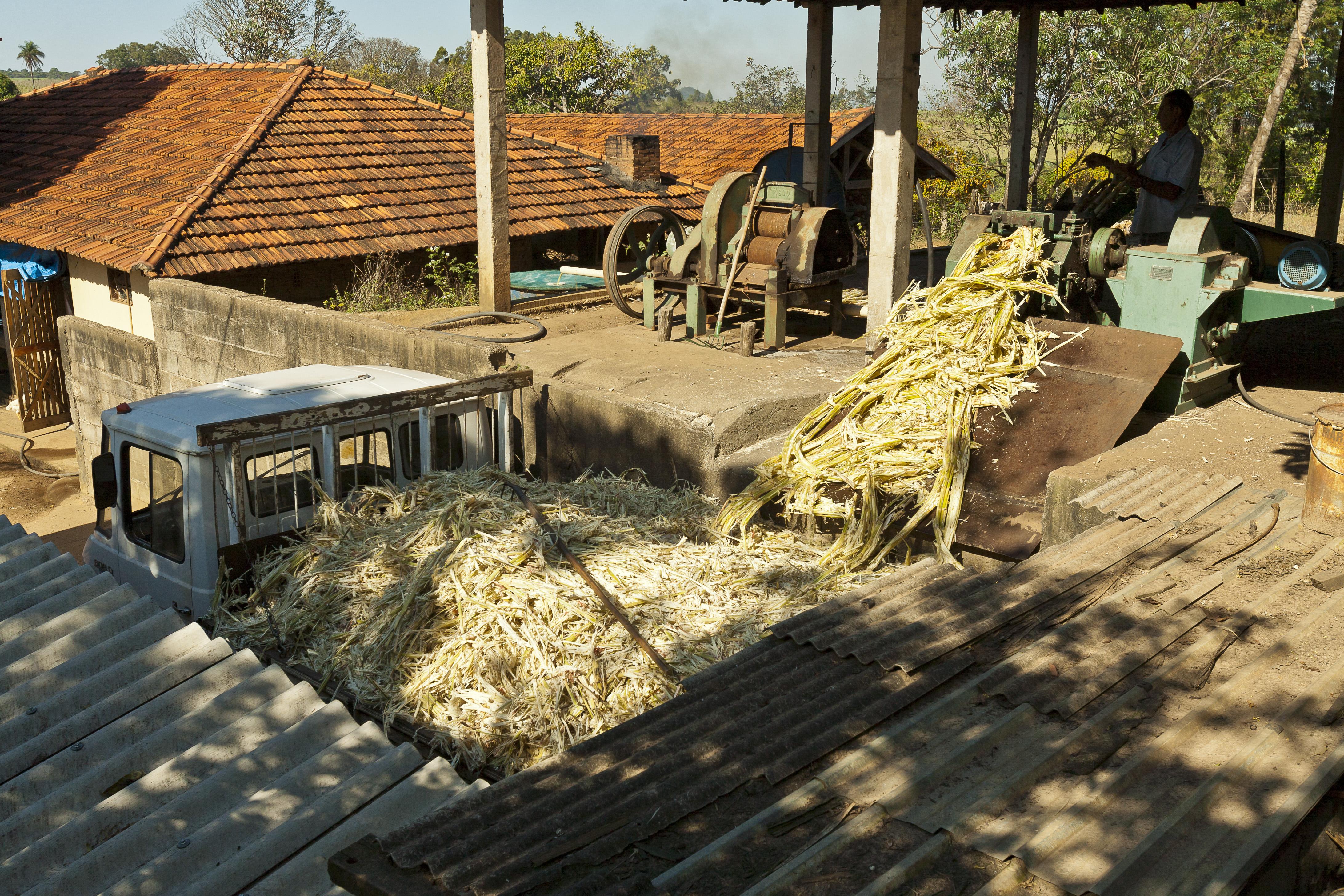 Bagazo de caña de azúcar, Jonathan Wilkins / CC BY-SA (https://creativecommons.org/licenses/by-sa/3.0)