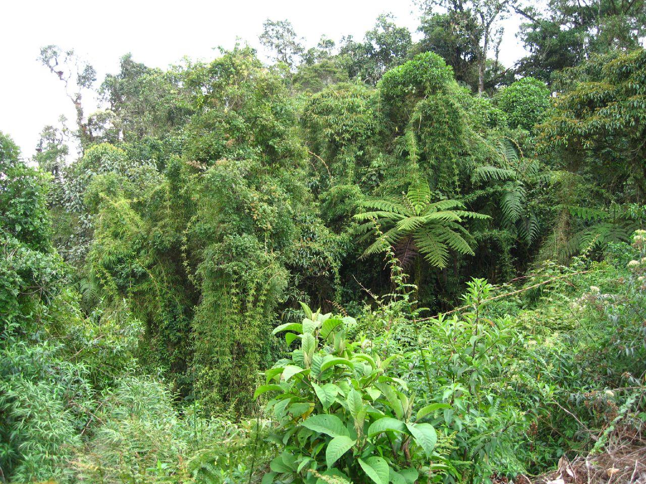 Amazon Rainforest Plants