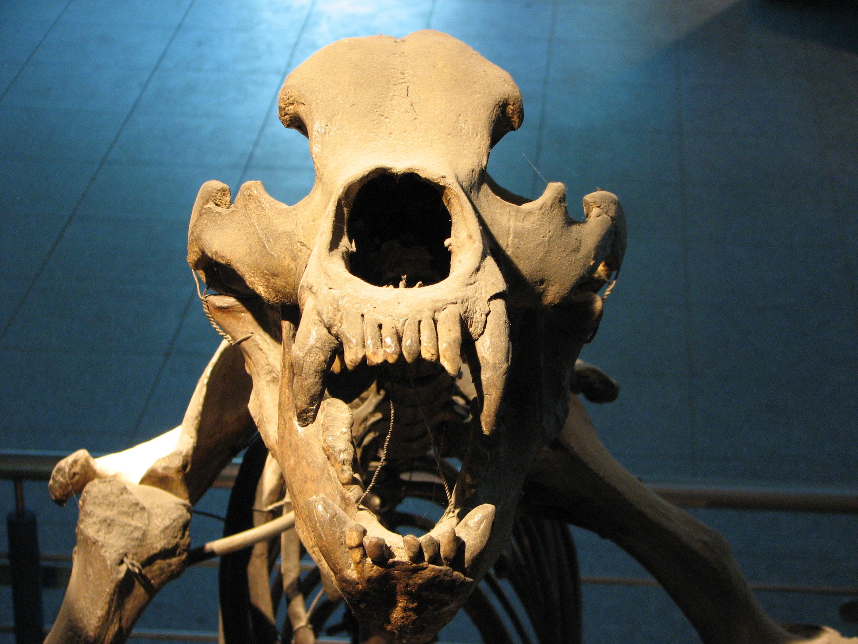 скелет медведя фото комби, чтоб маской
