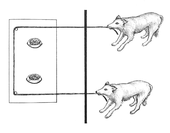 File:Cooperative pulling experiment dogs.jpg