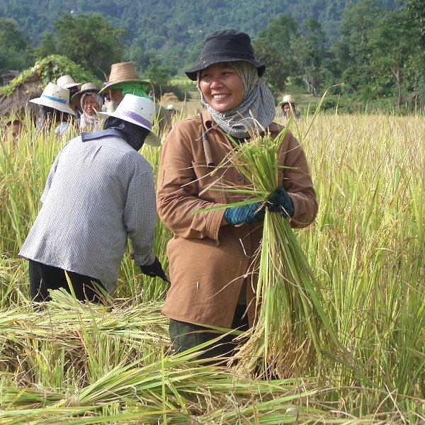 Field Worker Thailand (ryanwh - flickr).jpg