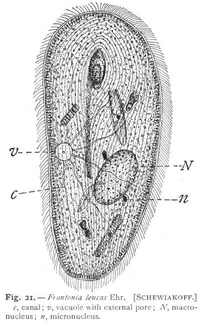 Holotricha