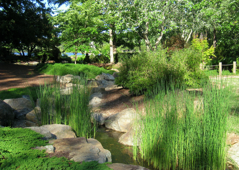 File furman university japanese garden stream 2 jpg for Little japanese garden