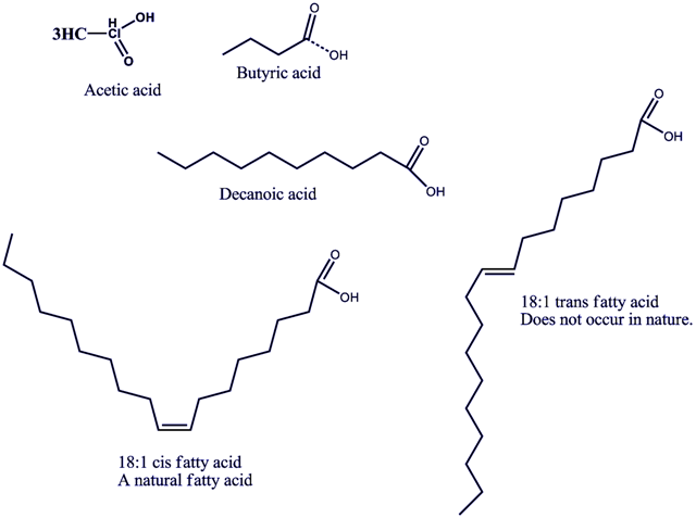 Structural Biochemistry  Lipids  Fatty Acids