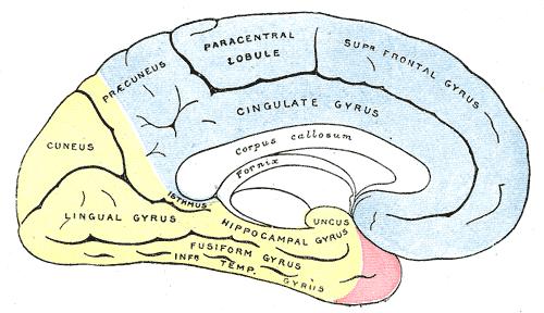 Posterior Cerebral Artery Wikiwand