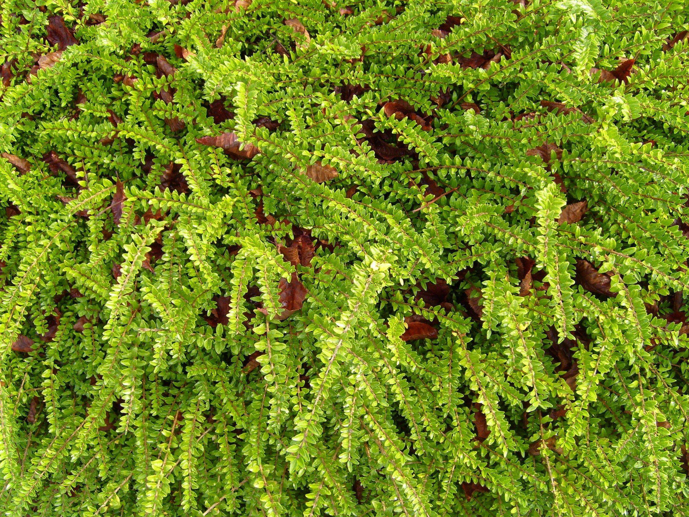 File green ground texture jpg wikimedia commons