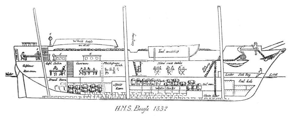 HMS Beagle longitudinal section as of 1832.